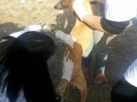 Campanha da USPA vacinou mais de 50 animais no bairro Cristo Rei