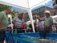 Comercialização de peixes na Semana Santa deve ultrapassar 3 mil toneladas