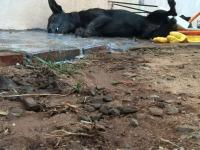 Pelo menos quatro cachorros morrem por envenenamento no bairro Vargas