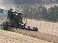 Colheita da soja deve ser concluída até o final deste mês
