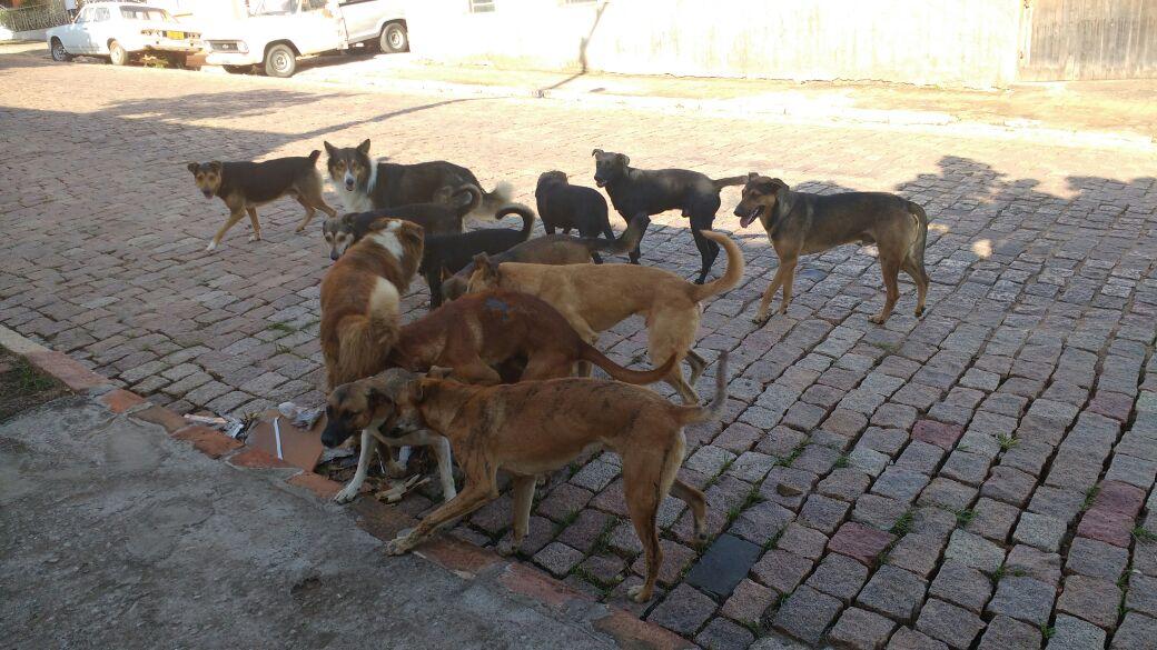 caes cachorros cio cadela (1)