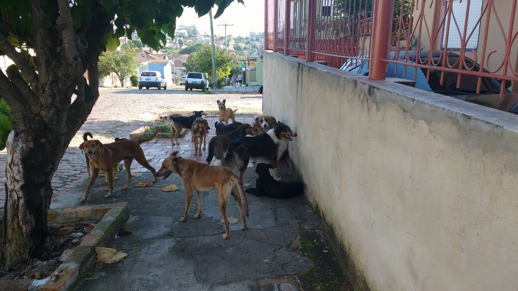 caes cachorros cio cadela (2)