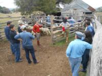 Produtores de São Sepé participam de reunião técnica sobre ovinocultura