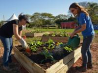 Expointer 2016: Emater apresenta possibilidades para hortas em pequenos espaços