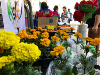 Mobilização troca cigarros por flores em São Sepé
