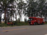 Bombeiros removem árvore que caiu sobre rodovia BR-392