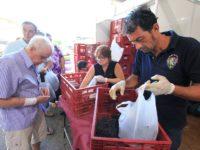Festa comercializou quase 4 mil quilos de uva