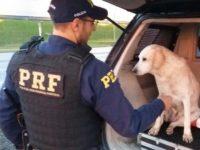 PRF resgata cadela em rodovia de Santa Maria