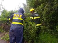 PRF retira árvores caídas e libera o trânsito em rodovias federais da região
