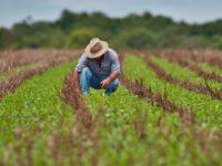 Programa de financiamento para pequenos produtores é retomado em São Sepé