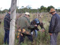 Produtores de São Sepé participam de capacitação sobre vitivinicultura